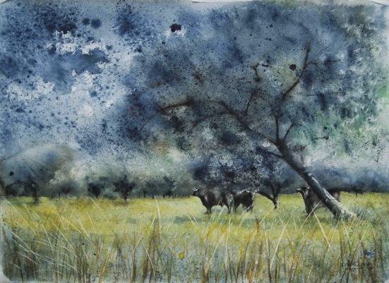 Campo de encinas con toros de Lidia. Acuarela y tinta 55x76cm