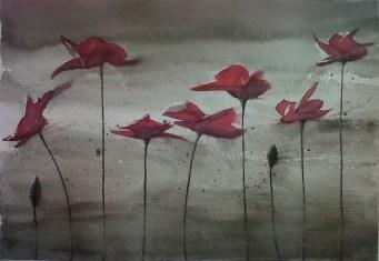Amapolas rojas. Acuarela 24x18cm